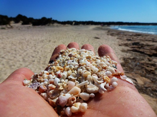 Small shells,Golden beach, Chrissi